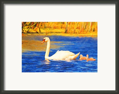 The Swan Family . Photoart Framed Print By Wingsdomain Art And Photography