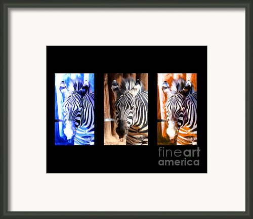 The Three Zebras Black Borders Framed Print By Rebecca Margraf
