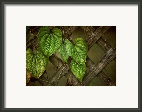 The Trellis Framed Print By Brenda Bryant