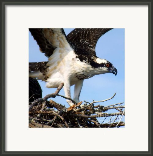 The True Fisherman Framed Print By Karen Wiles