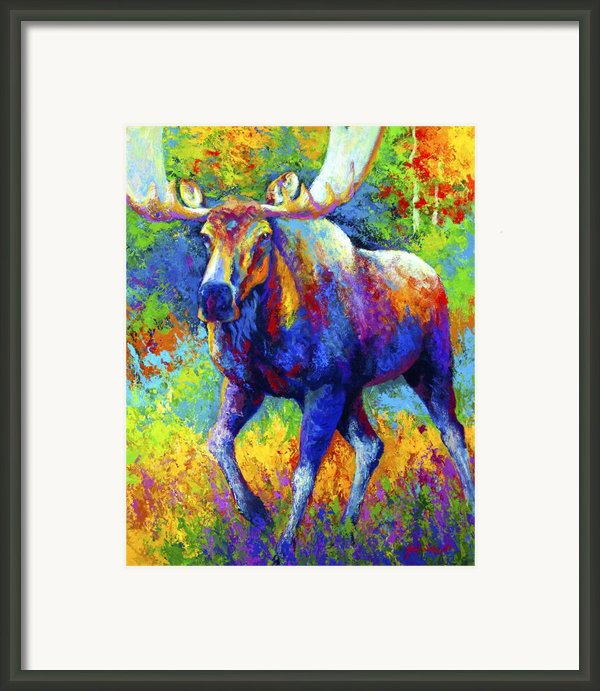 The Urge To Merge - Bull Moose Framed Print By Marion Rose