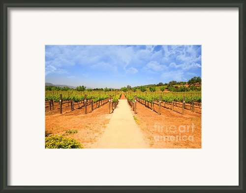 The Vineyard Framed Print By Cheryl Young