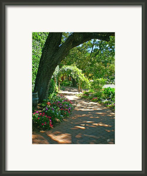 The Vineyard Walk Framed Print By Sotiri Catemis