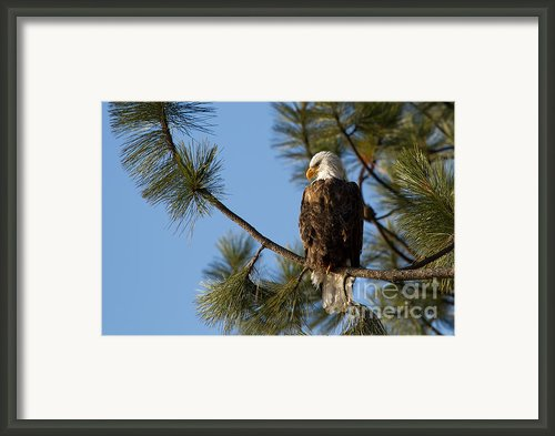 The Watchman Framed Print By Reflective Moments  Photography And Digital Art Images