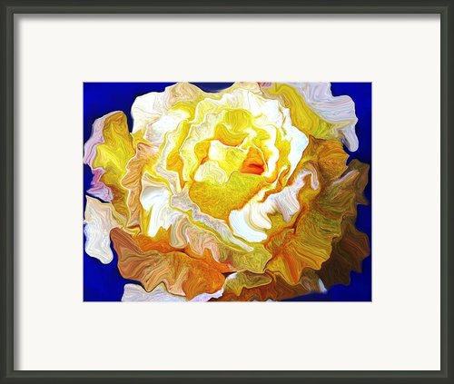 The White Rose Framed Print By David Raderstorf