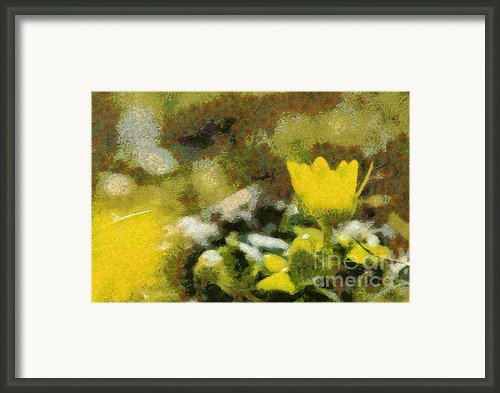 The Yellow Flower Framed Print By Odon Czintos