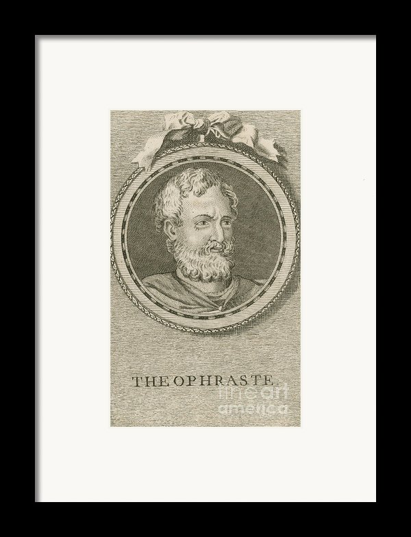 Theophrastus, Ancient Greek Polymath Framed Print By Science Source