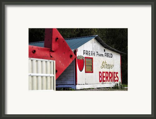 This Way For Strawberries Framed Print By David Lee Thompson
