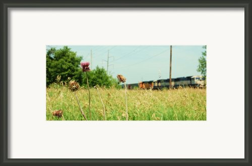 Thistle Rail Framed Print By Jame Hayes