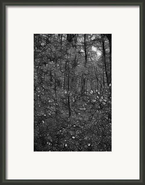 Thoreau Woods Black And White Framed Print By Lawrence Christopher