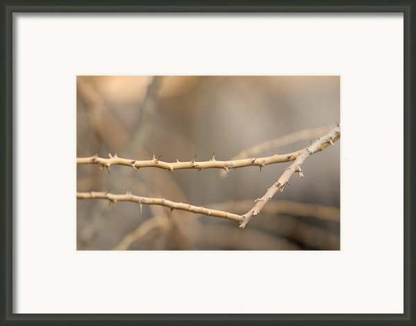 Thorny Desert Plant Inside The Desert Framed Print By Joel Sartore