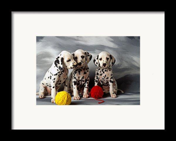 Three Dalmatian Puppies  Framed Print By Garry Gay