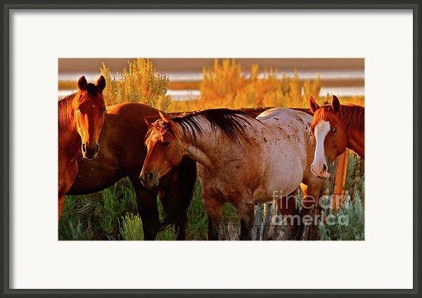 Three Horses Of A Suspicious Corral Framed Print By Gus Mccrea