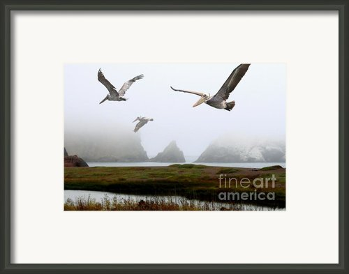 Three Pelicans Framed Print By Wingsdomain Art And Photography