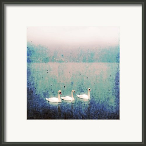 Three Swans Framed Print By Joana Kruse