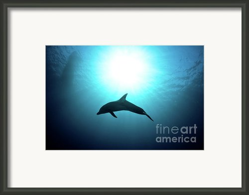 Three Year Old Dolphin  Framed Print By Hagai Nativ