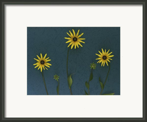 Three Yellow Flowers Framed Print By Deddeda