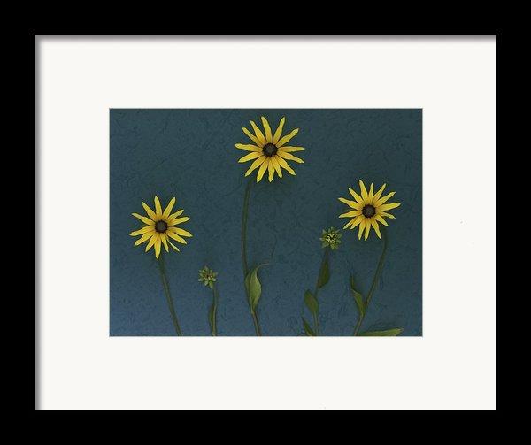 Three Yellow Flowers Framed Print By Deddeda