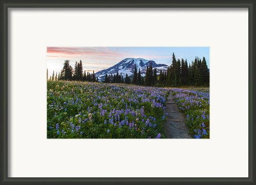 Through The Flowers Framed Print By Mike Reid