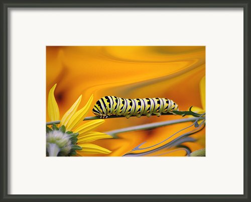 Through The Looking Glass... Framed Print By Arthur Miller