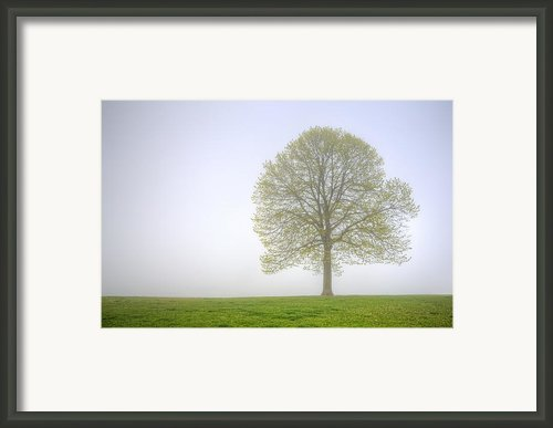 Through The Mist Framed Print By Scott Norris