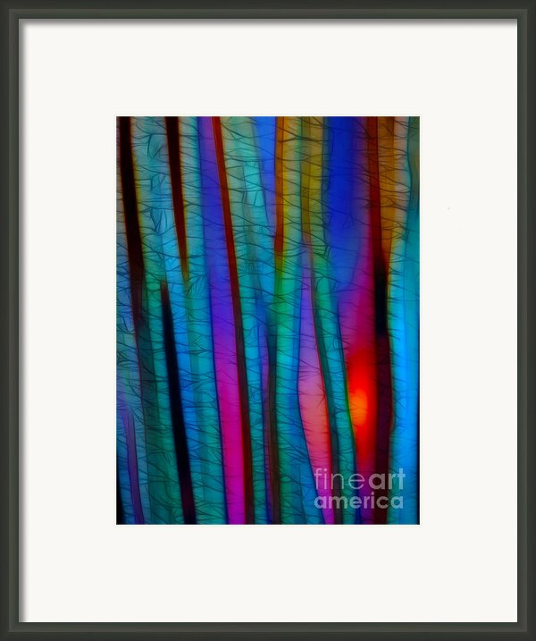 Through The Trees Framed Print By Judi Bagwell