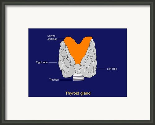 Thyroid Gland, Artwork Framed Print By Francis Leroy, Biocosmos