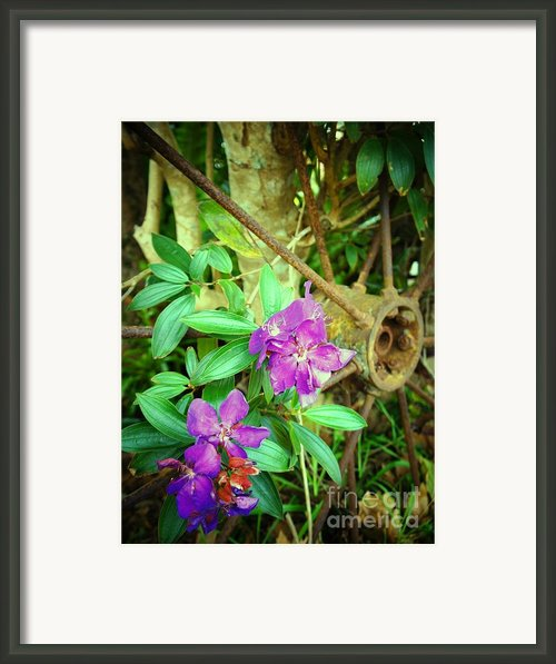 Tibouchina Framed Print By Therese Alcorn