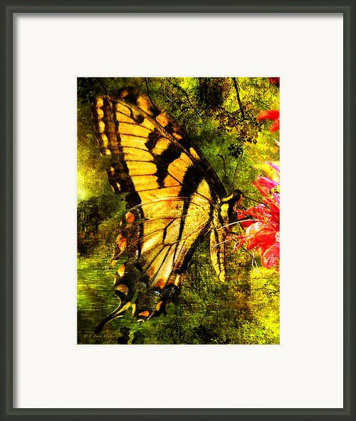 Tiger Swallowtail Butterfly Happily Feeds Framed Print By J Larry Walker