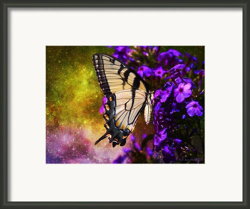 Tiger Swallowtail Feeding In Outer Space Framed Print By J Larry Walker