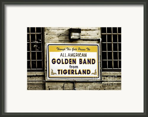 Tigerland Band Framed Print By Scott Pellegrin