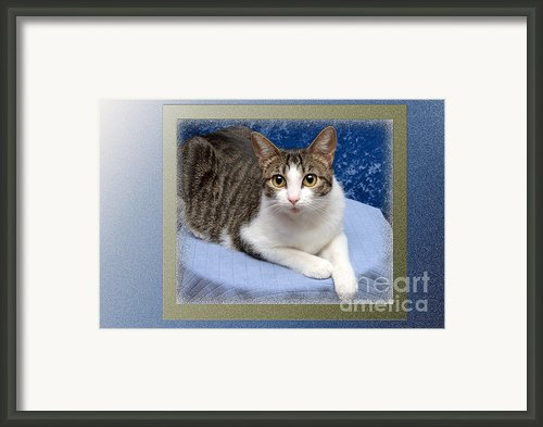 Tilly My Muse Framed Print By Andee Photography