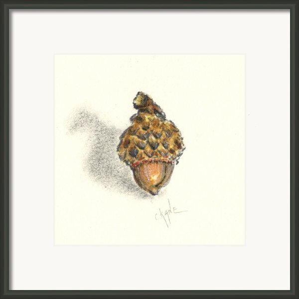 Tiny Acorn Framed Print By Christine Kane