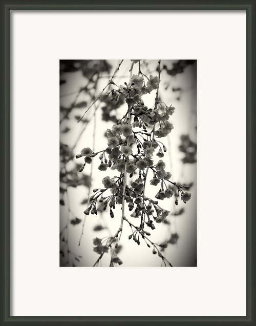 Tiny Buds And Blooms Framed Print By Angie Mckenzie