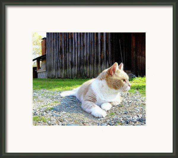 Toby Old Mill Cat Framed Print By Sandi Oreilly