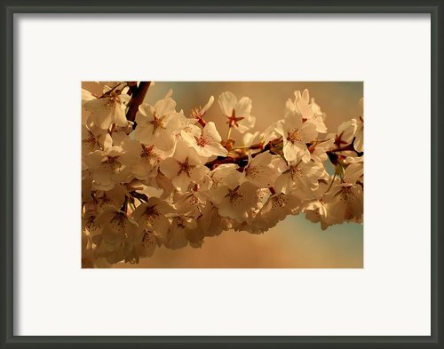 Together Framed Print By Angie Mckenzie