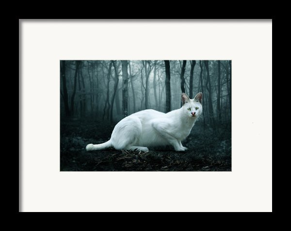 Tonga Framed Print By Big Cat Rescue