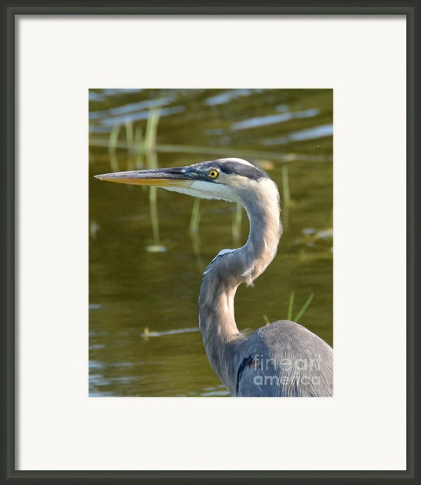 Too Close For Comfort Framed Print By Carol  Bradley