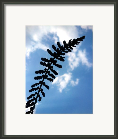 Touch The Sky Framed Print By Lucy D