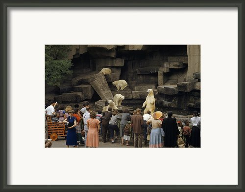 Tourists Watch Captive Polar Bears Framed Print By B. Anthony Stewart