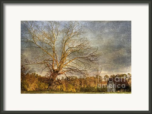 Towering Oak Barn Framed Print By Benanne Stiens