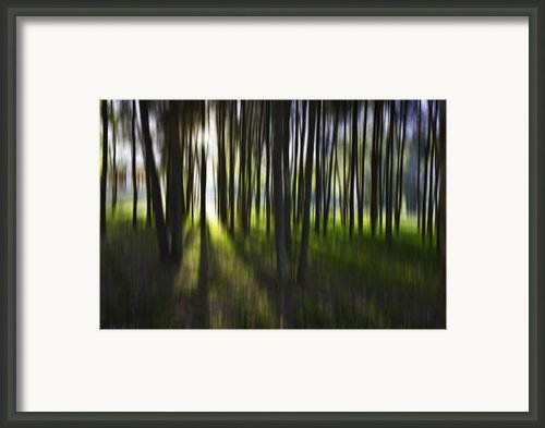 Tree Abstract Framed Print By Sheila Smart