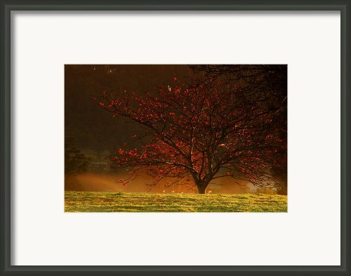 Tree At Sunrise Framed Print By Noel Elliot