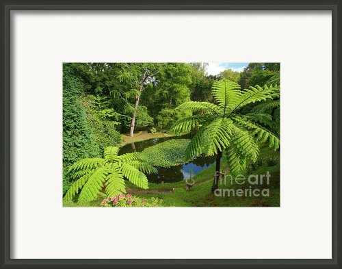 Tree Ferns Framed Print By Gaspar Avila