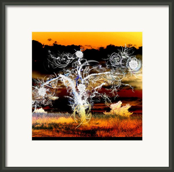 Tree Framed Print By Ilias Athanasopoulos