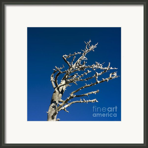 Tree In Winter Against A Blue Sky Framed Print By Bernard Jaubert