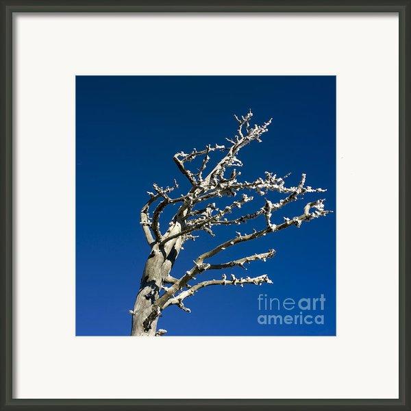 Tree In Winter Against A Blue Sky Framed Print By Bernard Jaubert