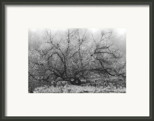 Tree Of Enchantment Framed Print By Debra And Dave Vanderlaan