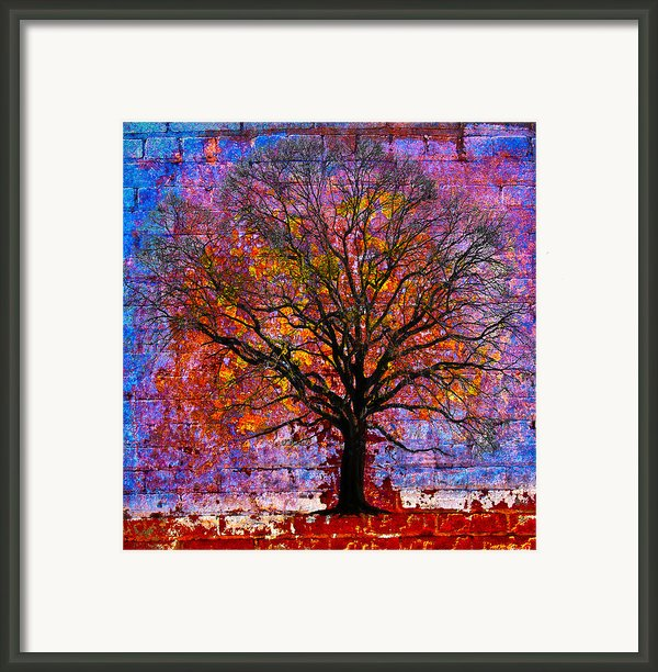 Tree Of Life Framed Print By David Clanton