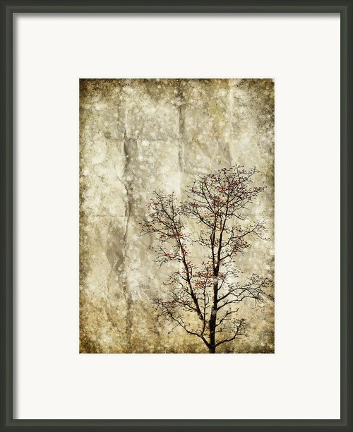 Tree On Old Grunge Paper Framed Print By Setsiri Silapasuwanchai